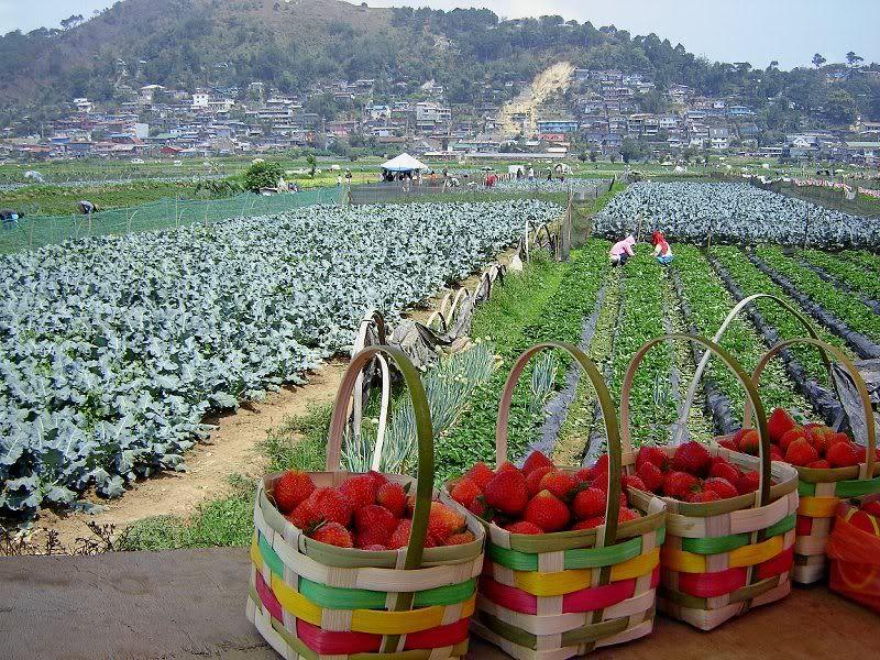 Taste Our Finest Strawberries