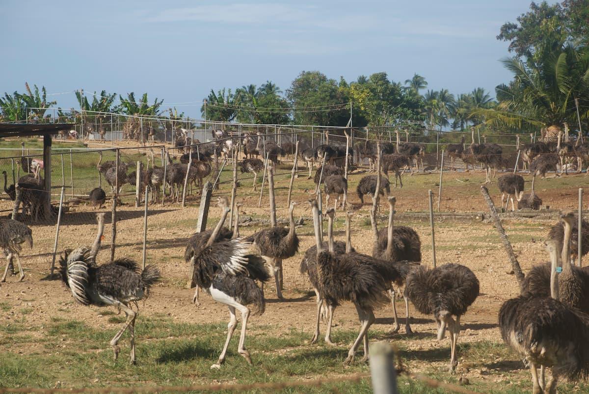Kebun Binatang dan Kebun Raya Mantianak