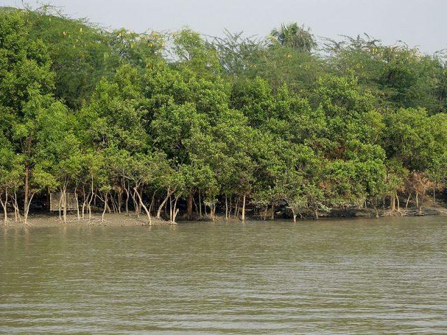 Pinabacdao Mangrove Safari