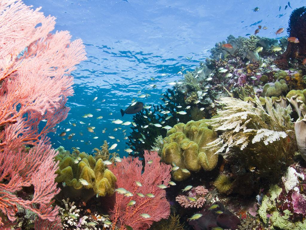 Taman Laut Tuka