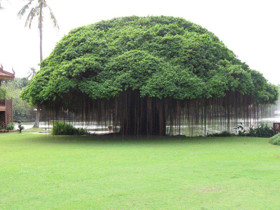 Taman Balete & Pohon Millenium